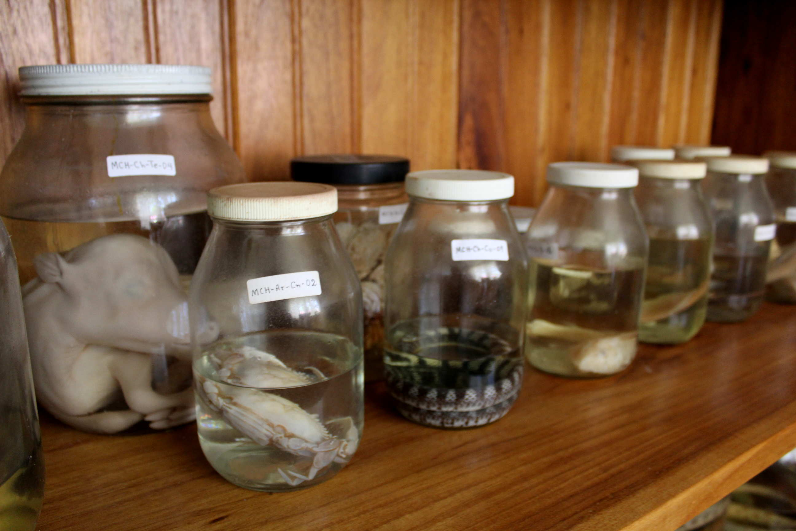 Exposiciones privadas de fauna en formalina